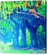 The Blue Live Oaks Acrylic Print