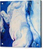 The Blue Roan Acrylic Print by Marcia Baldwin