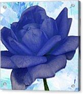 The Blue Rose Acrylic Print