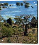 The Boabob Tree Acrylic Print