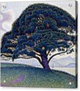 The Bonaventure Pine  Acrylic Print