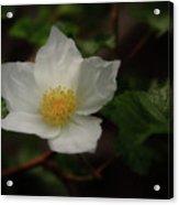 The Boulder Raspberry Flower Acrylic Print