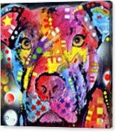 The Brooklyn Pitbull 1 Acrylic Print by Dean Russo