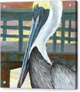 The Brown Pelican Acrylic Print
