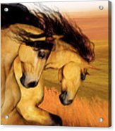 The Buckskins Acrylic Print
