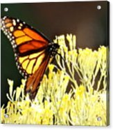 The Butterfly 2 Acrylic Print