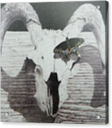 The Butterfly And The Skull Acrylic Print