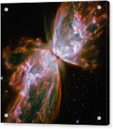 The Butterfly Nebula Acrylic Print by Stocktrek Images