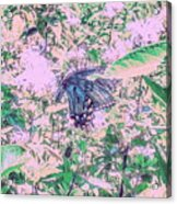 The Butterfly Acrylic Print