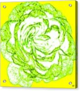 The Cabbage Rose Acrylic Print