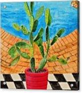The Cactus From Nigeria Acrylic Print