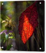 The Calling Of Fall Acrylic Print