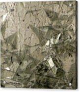the 'Casuarina Understory' Acrylic Print