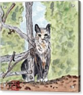 The Cat At The Fence Acrylic Print