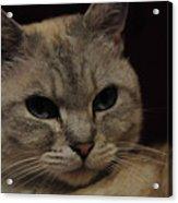 The Cat Acrylic Print