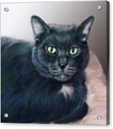 The Cat Named Boy Acrylic Print