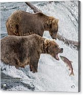 The Catch - Brown Bear Vs. Salmon Acrylic Print