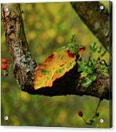 The Changing Season Acrylic Print