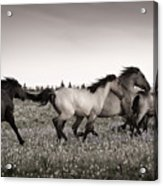 The Chase 1 Copper Acrylic Print by Roger Snyder