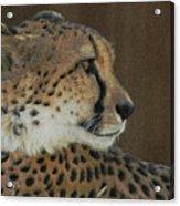 The Cheetah 2 Acrylic Print