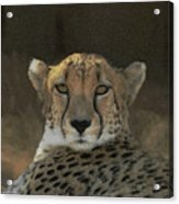 The Cheetah Acrylic Print