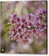 The  Cherry Acrylic Print