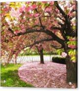 The Cherry Tree Acrylic Print