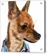 The Chihuahua Acrylic Print