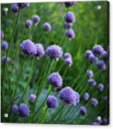 The Chive Patch Acrylic Print