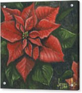 The Christmas Flower Acrylic Print by Jeff Brimley