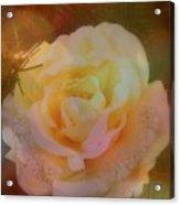 The Christmas Rose Acrylic Print