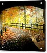 Under The Cobble Stone Bridge Acrylic Print