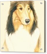 The Collie Acrylic Print by Tim Ernst