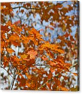 The Color Of Fall 1 Acrylic Print
