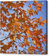 The Color Of Fall 2 Acrylic Print