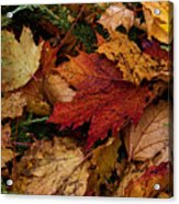The Color Of Fall Acrylic Print