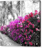 The Color Purple Acrylic Print
