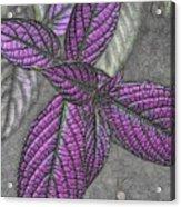 The Color Purple Acrylic Print