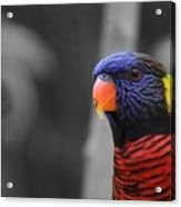 The Colorful Bird Acrylic Print
