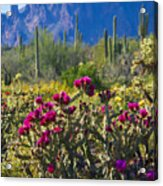 The Colorful Desert  Acrylic Print