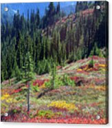 The Colors Of Autumn Acrylic Print