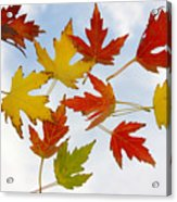 The Colors Of Fall Acrylic Print