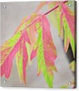 The Colors Of Shumac 2 Acrylic Print