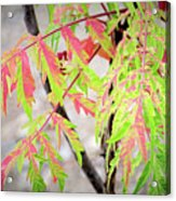 The Colors Of Shumac 3 Acrylic Print