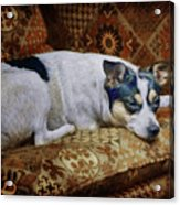 The Comforts Of Home Acrylic Print