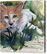 The Community Cat Acrylic Print