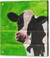 The Cow Acrylic Print