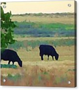The Cows Next Door Acrylic Print