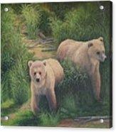 The Cubs Of Katmai Acrylic Print