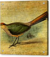The Cuckoo's Note Acrylic Print